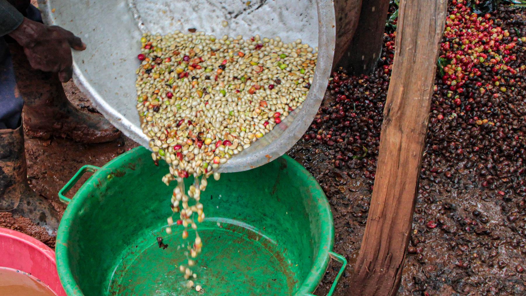 Reste des Fruchtfleisches müssen später aussortiert werden.