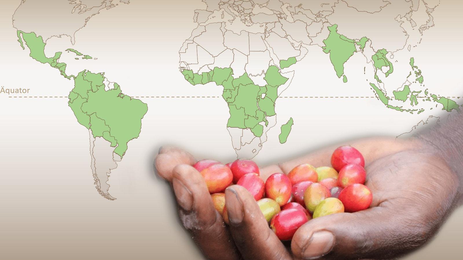 Kaffeeproduzent:innen haben kaum Chancen auf höhere Einkommen