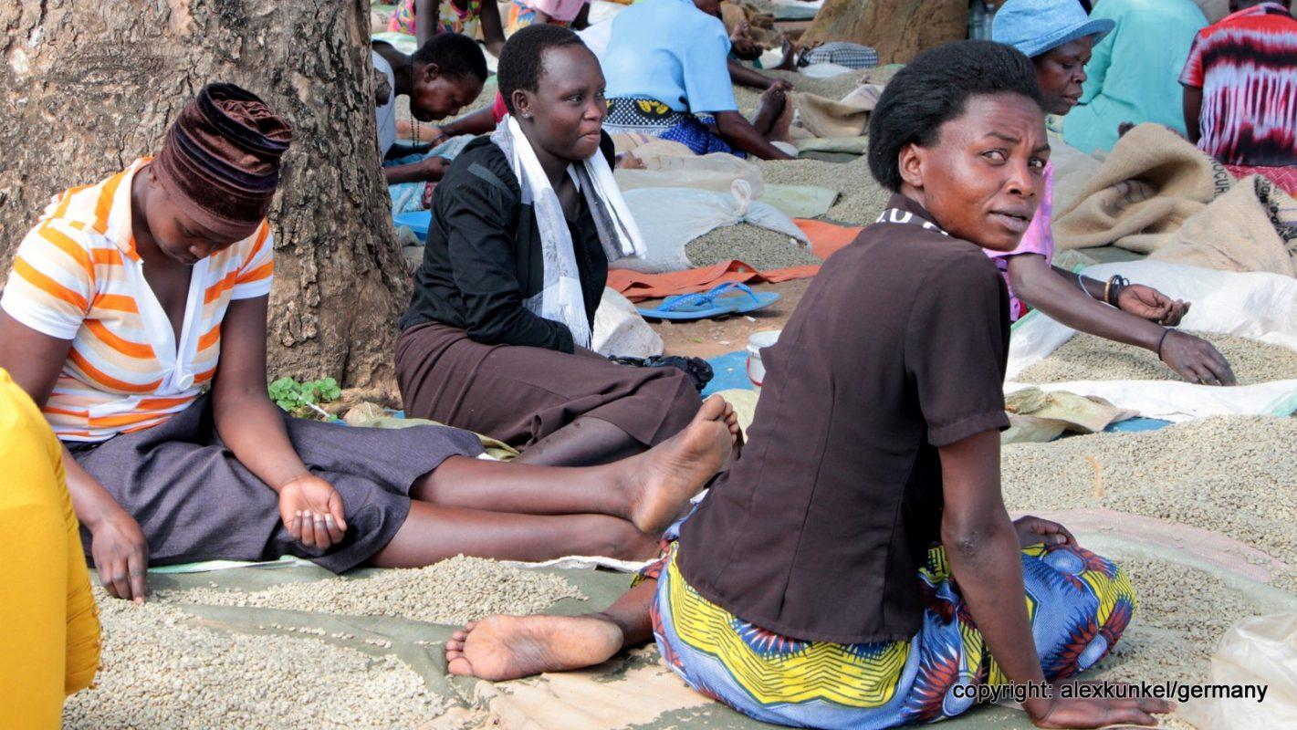 Frauen sortieren Kaffee in Uganda (Bild: Alex Kunkel - 2013)