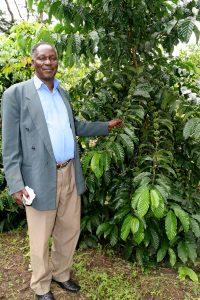 Kaffee-Farmer zeigt seine prächtigen Robusta-Bäume in der Nähe von Mubende, Zentraluganda
