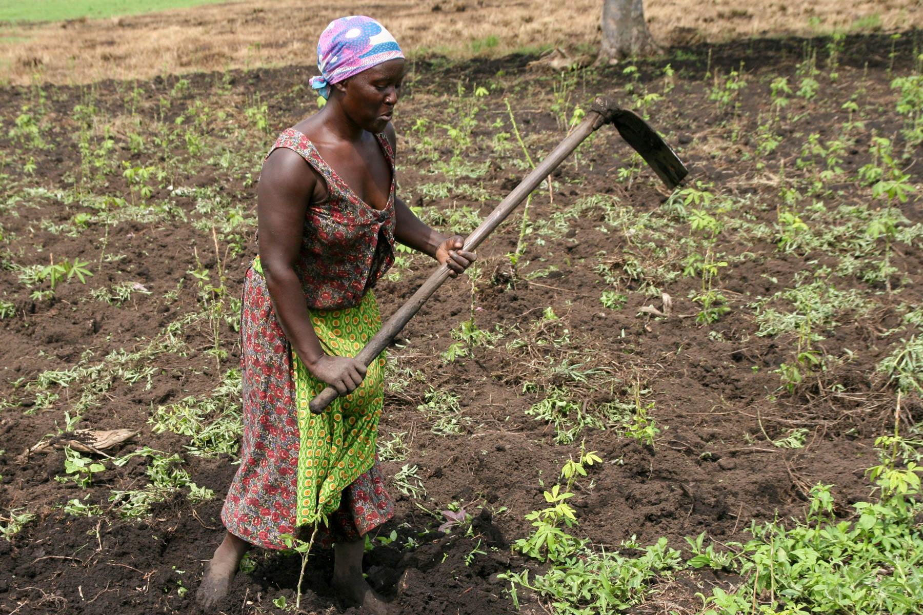 Frauen machen 80 Prozent der Feldarbeit