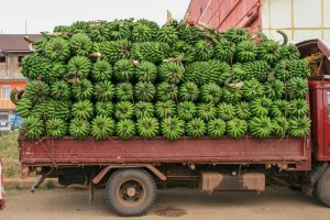 Laster mit Matoke-Bananen