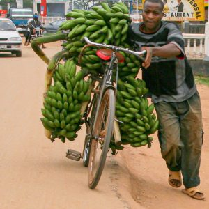 Matokestauden - Transport mit dem Fahrrad