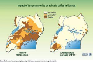 Bereits 1989 wurde die Reduktion der Kaffee-Anbaufläche in Uganda mit diesem Schaubild vorhergesagt. Die aktuellen Daten bestätigen das.
