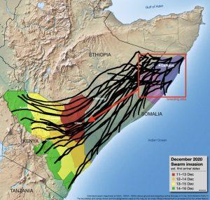 Im Dezember 2020 waren erneut Heuschreckenschwäre aus Somalia im Anflug. Am stärksten wurde Kenia betroffen.